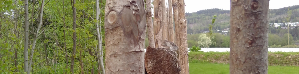 Myggfanger